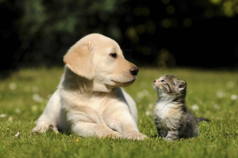 Gatos versus perros: ¿Cuál es más inteligente?