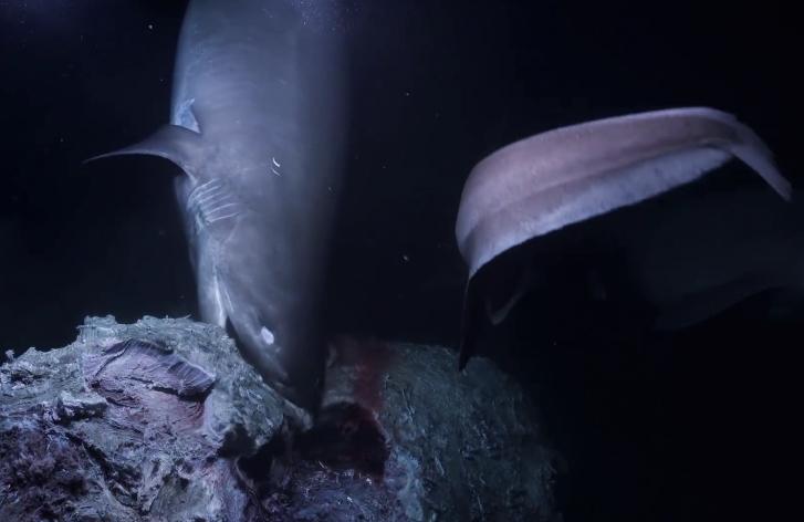 Tiburones atacan a un submarino, en una escena digna de película de terror