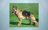 Marysville Dog Training