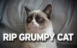 The Legacy Of Grumpy Cat