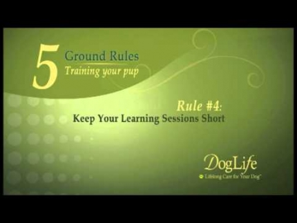 Five rules for puppy training