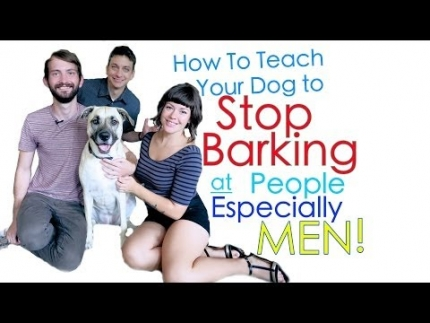 Is your dog scared of new people?