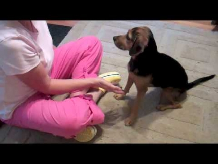 Does your dog really like being petted?