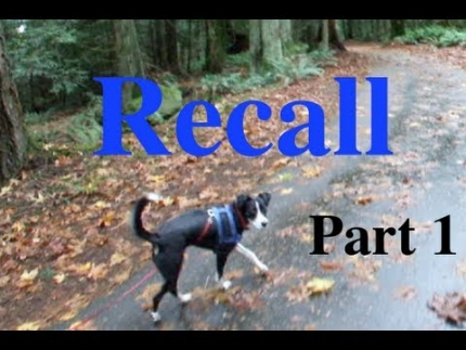 Shaping a recall - Part 1