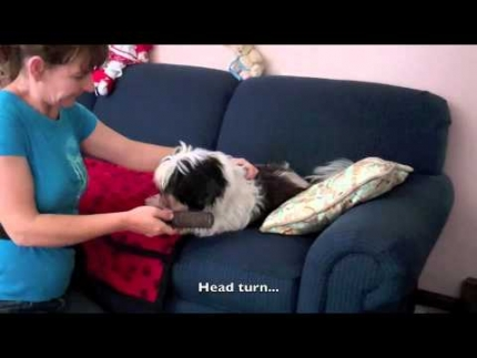 Handling & grooming - counter conditioning
