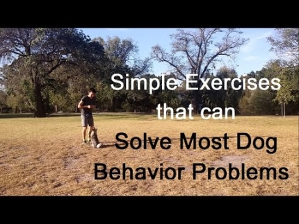 Simple exercises to solve many dog behavior problems