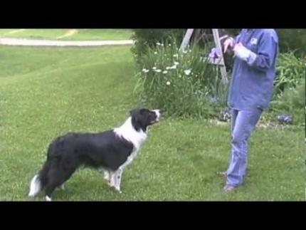 Using play in dog training