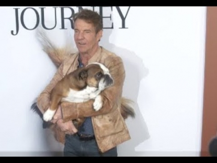 "Dennis Quaid's dog 'Peaches' at the ""A Dog's Journey""..."