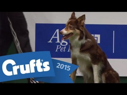 The Agility Championship Final | Crufts 2015