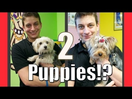 Can you train 2 puppies at once?
