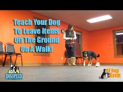 Teach your dog to leave things found on the ground