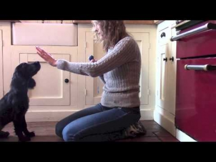 Hand target training for a puppy