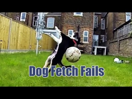 Dog failing at fetch