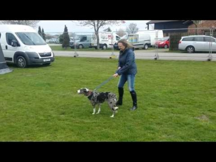 Rehabilitating a rescue dog-2