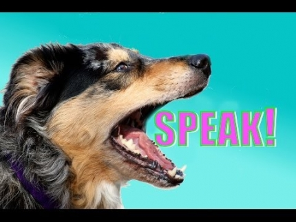 Train your dog to speak on cue (which will help you teach...