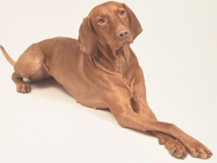 Introducing real dog yoga