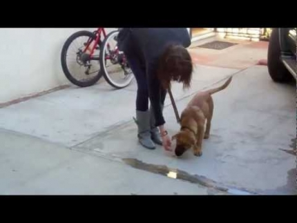 Puppy foundation skills 2