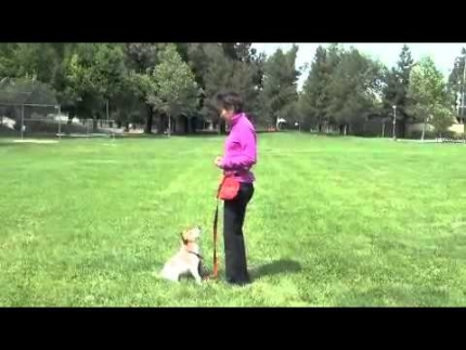 Speed of treat delivery in dog training