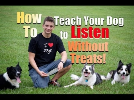 How to get your dog to listen - without treats