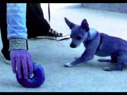 How to teach your puppy to 'leave it'
