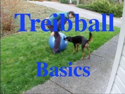 The basics of Treibball