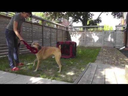 Playing tug to train
