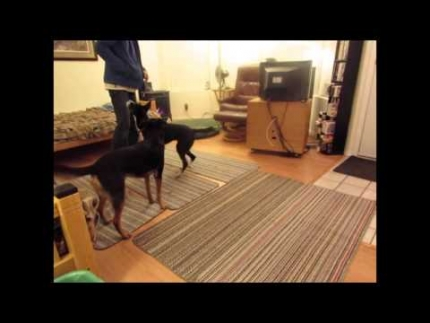 Stopping dog to dog play for multi-dog households