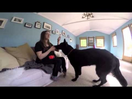 Teaching your dog to hold an item & retrieve