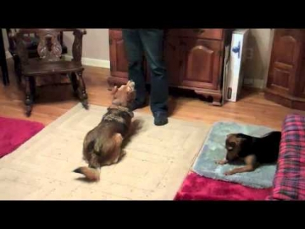 Training two dogs - first lessons on the mat