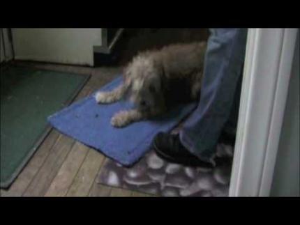 Barking a problem? A fun fix
