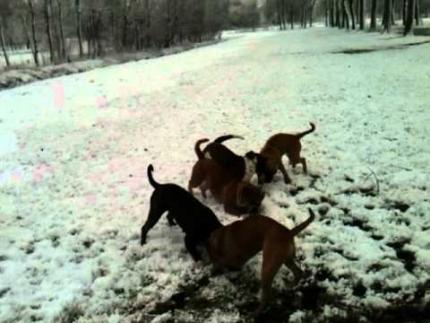 6 Leavitt Bulldogs only one stick
