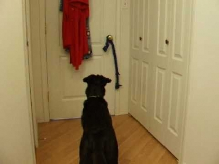 Does your dog really understand a verbal cue?