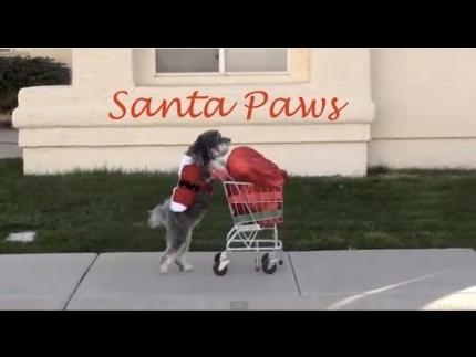 Dog saves Christmas