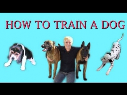 How to train a dog - the basic concepts