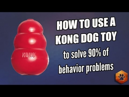How to use a Kong to eliminate 90% of behavior problems