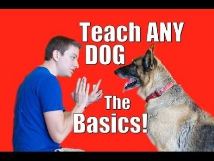 Dog training 101 - the basics