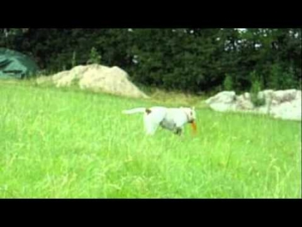 Leavitt Bulldog Frisbee part3