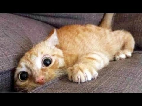 Top 200 Funny Animals Vines || FunnyVines