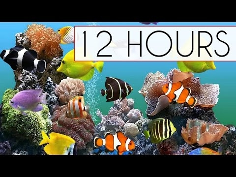 CORAL REEF AQUARIUM COLLECTION • 12 HOURS • BEST RELAX MUSIC •...