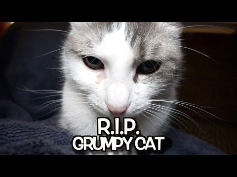Talking Kitty Cat 67.2: - R. I. P.  Grumpy Cat - We'll never...