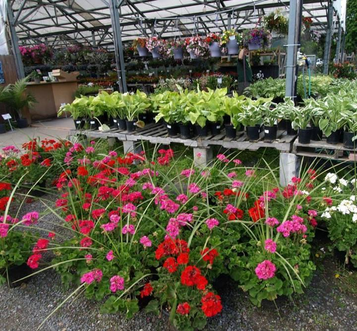 Hewitts Garden Center Glenmont