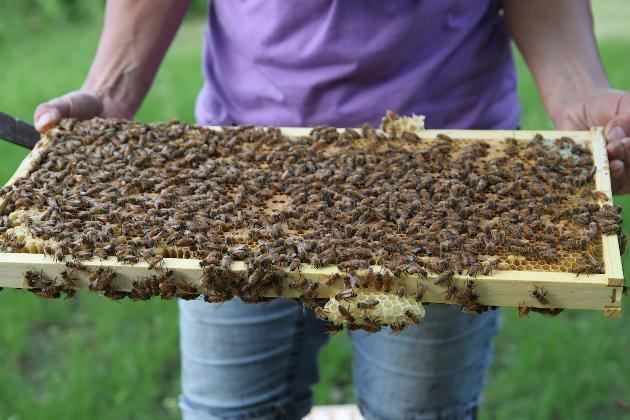 Gold Star Honeybees