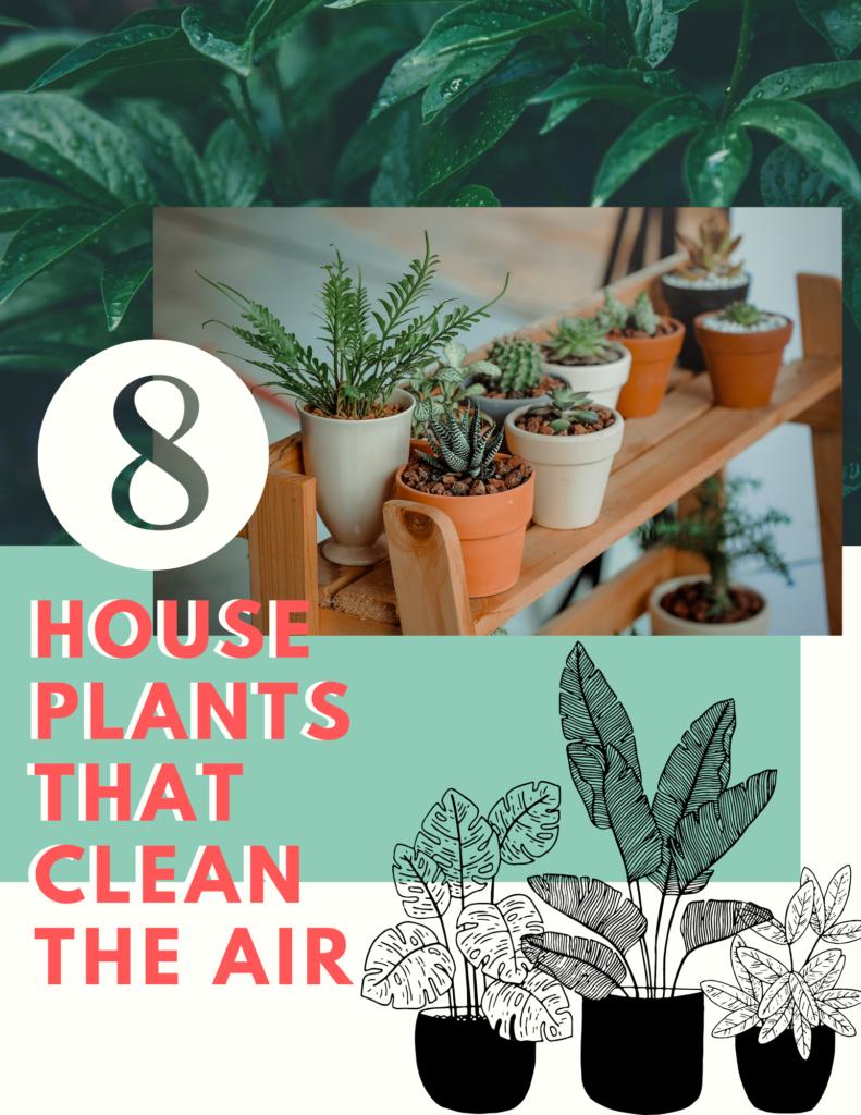 houseplants that clean the air (1)