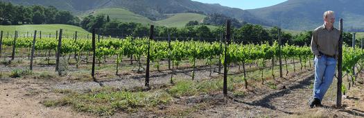 Vineyards tour best flip