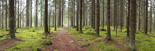 Forest panorama 2