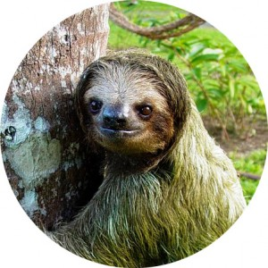 Image of Sammy the Sloth hanging by a tree