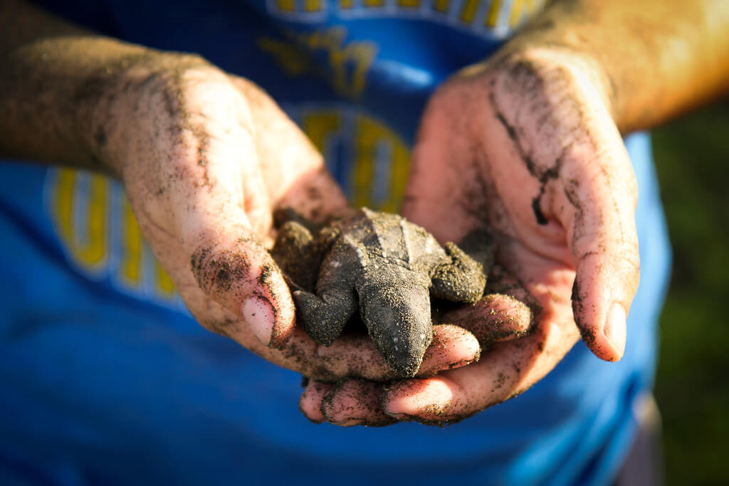 Image of a student holding a baby turtle