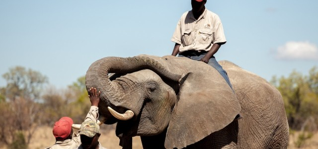 Bomb-Sniffing Elephants Are Just One Example of Pentagon Waste