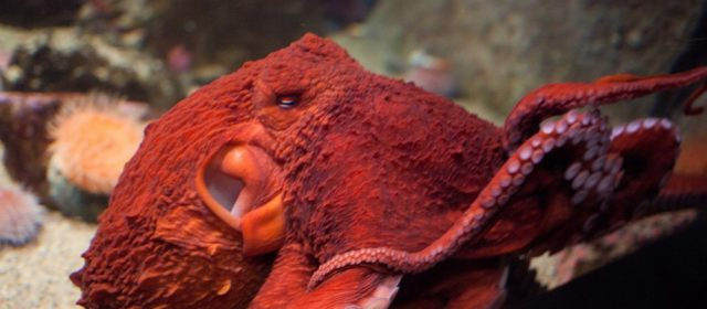 Mexican Organized Crime Groups Are Now Stealing Octopuses