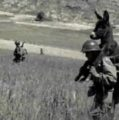 """Coronavirus meme featuring """"WWII donkey"""" is not what it claims to be"""